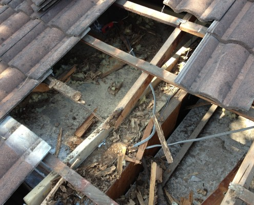 Termite damage Queensland