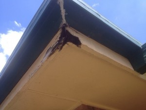 Timer fascia repairs Brisbane