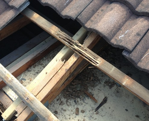 Termite damage Brisbane